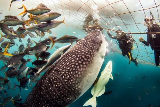 Visita ai pesci più grandi del Giappone