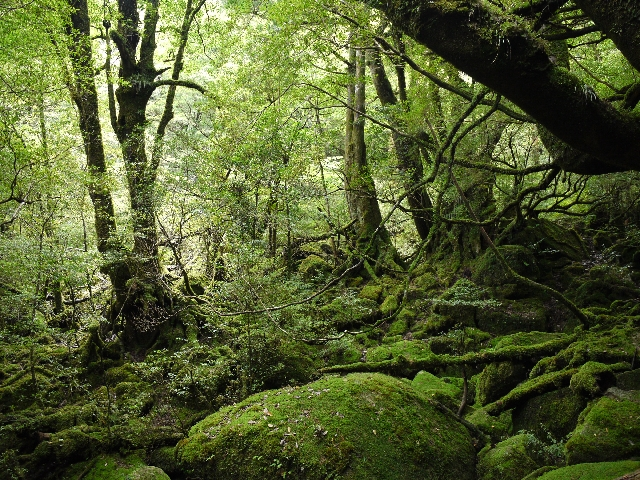 Giappone da visitare: YAKUSHIMA
