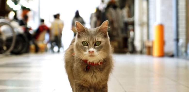 Cat Street View: Hiroshima vista dal punto di vista dei gatti