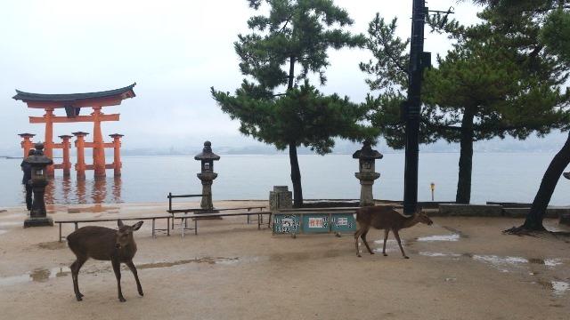 Miyajima: l'isola giapponese dove convivono uomini e dei
