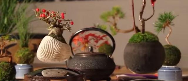 Giappone: presto bonsai fluttuanti per tutti