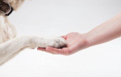 Giappone: i non vedenti accompagnati dai loro cani guida vengono discriminati