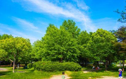 I Parchi Nazionali del Giappone impegnati per aumentare i visitatori