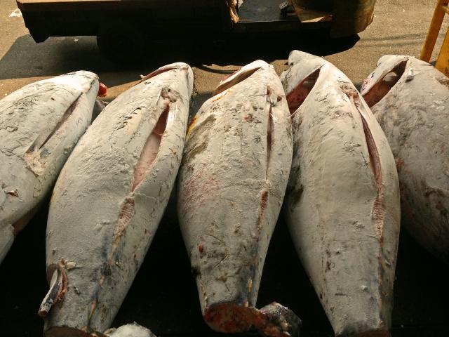 Troppi turisti e il mercato del pesce di Tokyo cambia orario!